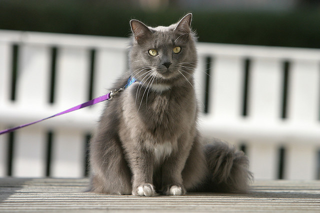 best-cities-for-cats-leash