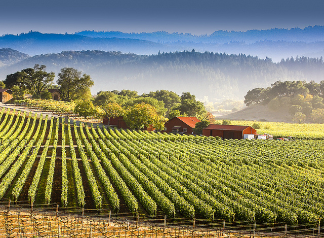 napa-valley-dog-lovers-city
