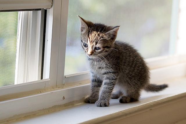 cities-for-cat-people-kitten