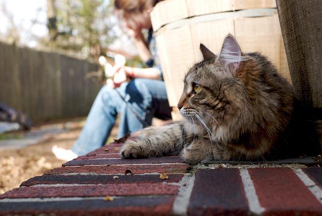 best-cities-cat-people-outdoors