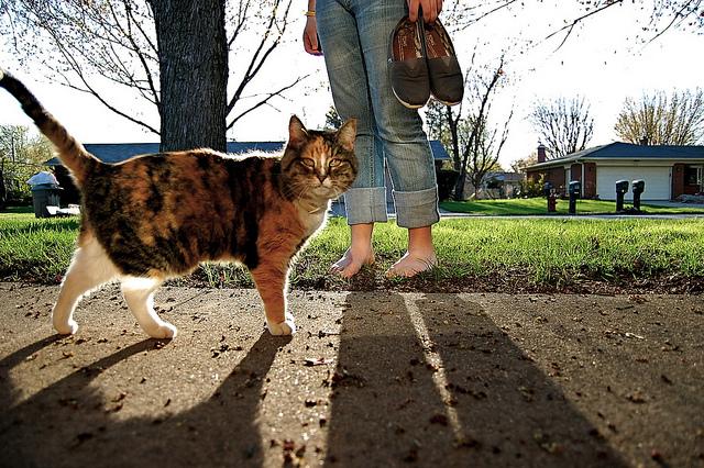 best-cities-cat-people-sunshine