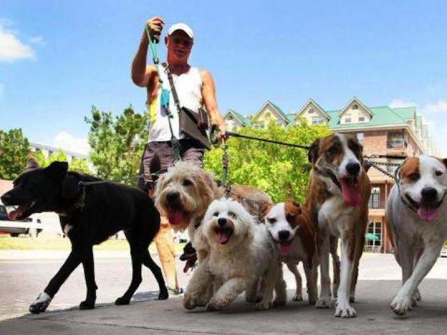 modernize-dog-walker-mortgage
